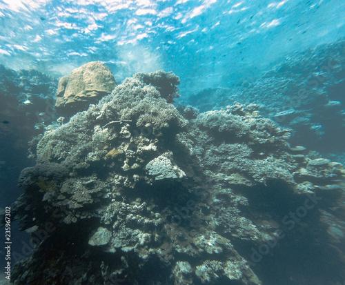 Staande foto Koraalriffen underwater