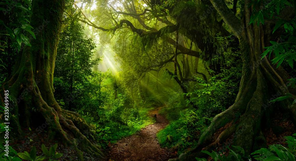 Fototapeta Asian tropical rainforest