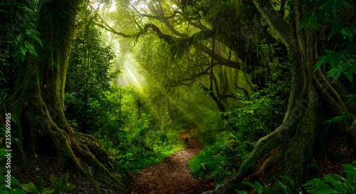Obraz Asian tropical rainforest - fototapety do salonu