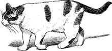 A Spotted Domestic Cat Goes Fo...