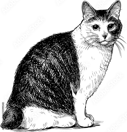 Sketch of a sitting domestic cat Wall mural