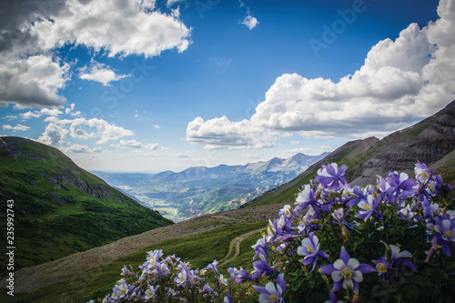 Photo Columbine flowers in the mountains