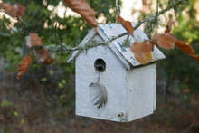 Simple White Birdhouse Hanging From A Leafy Branch With Bokeh