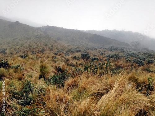 Spoed Foto op Canvas Zuid-Amerika land Vegetazione della riserva naturale Cayambe Coca