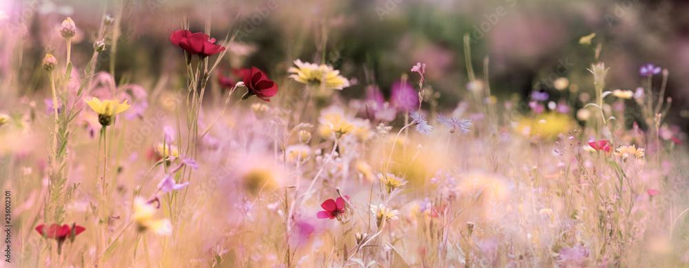 Fototapeta wildblumenwiese natur banner pastell