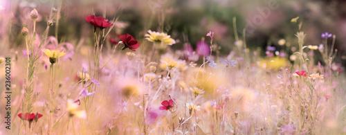 Fototapeta wildblumenwiese natur banner pastell obraz