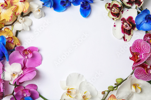 Beautiful tropical orchid flowers on white background, top view. Space for text
