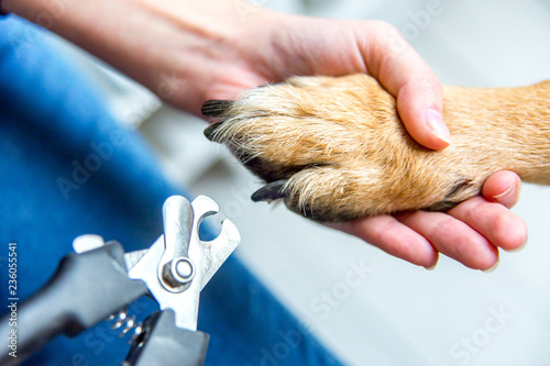 Fotografía person cutting dog claws at home with a pair of scissors