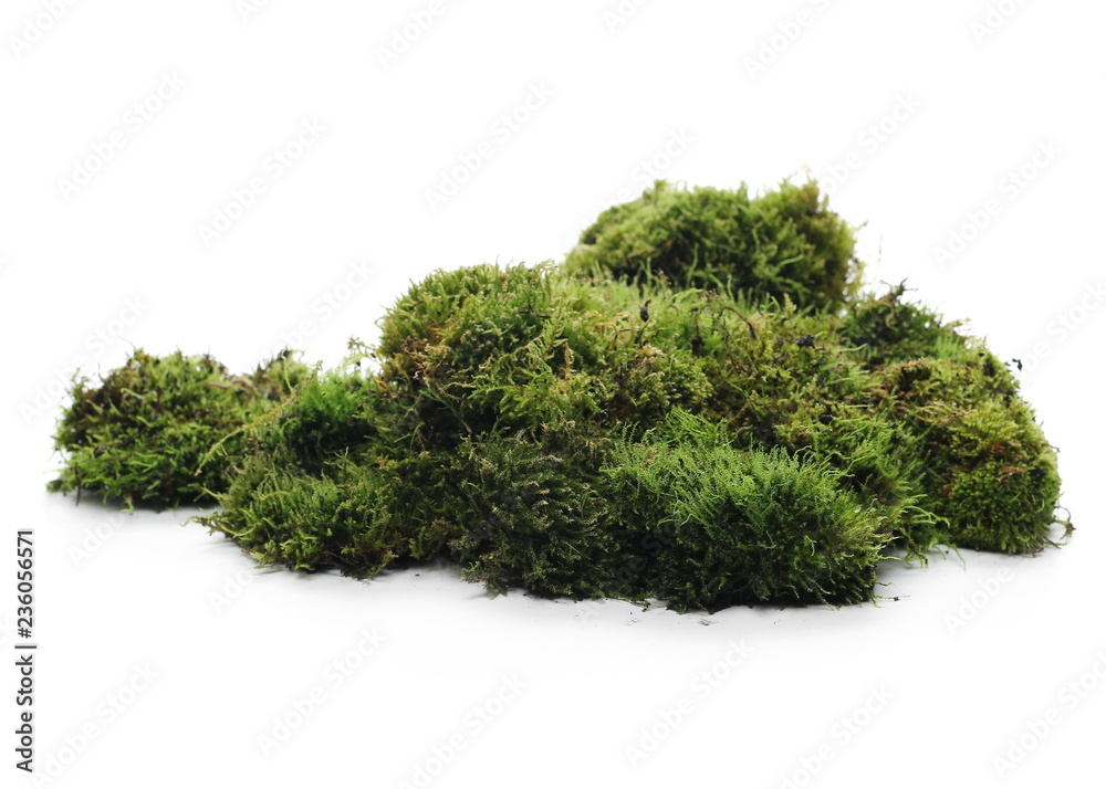 Fototapety, obrazy: Green moss with grass isolated on white background