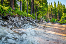 Path In Green Forest With Tree Roots Exposed
