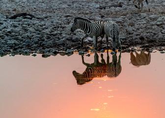 Fototapeta na wymiar Zebras