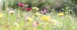 canvas print picture - wildblumenwiese natur banner pastell
