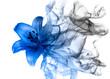 Leinwanddruck Bild - Beautiful lily flower from smoke