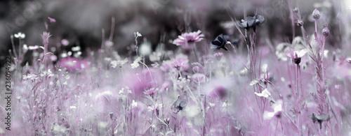 Fototapety, obrazy: wildblumenwiese natur konzept trauer