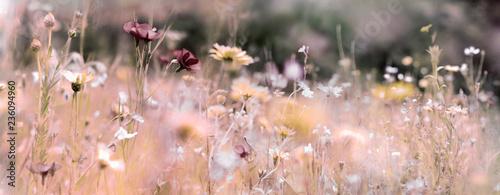 Fototapeta  wildblumenwiese natur konzept trauer