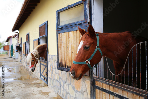 Photo  Horse and hippodrome photos for your project