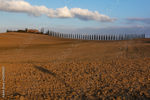 Foto op Plexiglas Toscane Traditional Tuscany landscape with cypress trees and farmhouse in evening sunlight, Italy