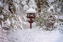 Picturesque Landscape Of Forest With Vergreen Coniferous Fir Branches Covered With Snow And Wooden Bird Feeder, Cold Winter Day. Natural Background