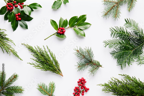 Photo sur Toile Fleur Collection of decorative Christmas plants with green leaves and holly berries.