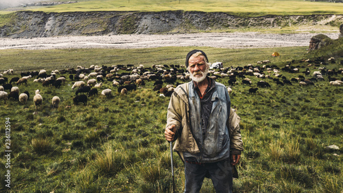 Fotomural Portrait of shepherd with sheep on a field in the mountains