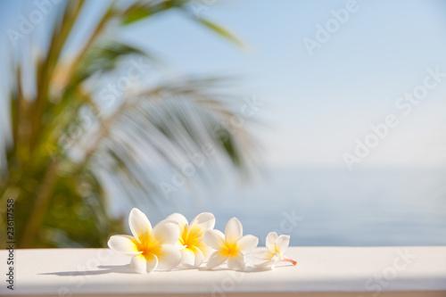Keuken foto achterwand Frangipani Frangipani flowers on the background of the sea.