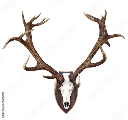 Leinwand Poster Big Red Deer Antlers - hunting trophy isolated on  white.