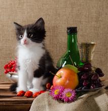 Black And White Kitten Among Fruits