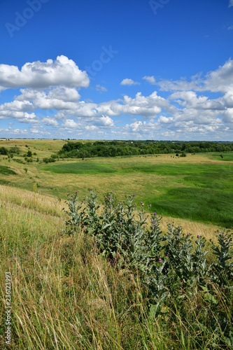 The Beautiful summer country landscape in steppe