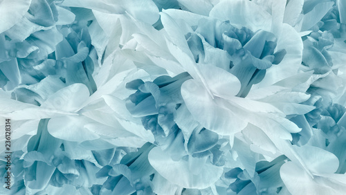 Floral turquoise background. Flowers white-turquoise irises close up. Flower composition. Nature.