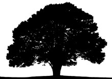 Black Silhouette Of Summer Tree On A White Background.