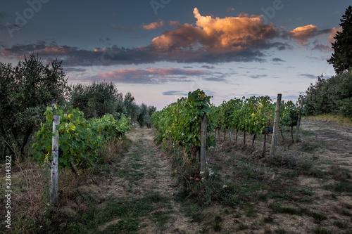 Peccioli, Pisa, Tuscany - Countryside landscape