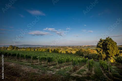 Keuken foto achterwand Grijze traf. Peccioli, Pisa, Tuscany - Countryside landscape