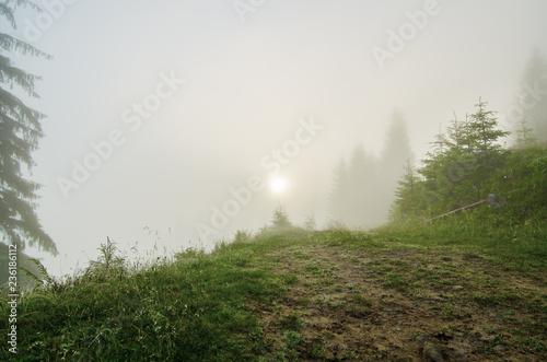 Fototapeten Wald Foggy morning landscape