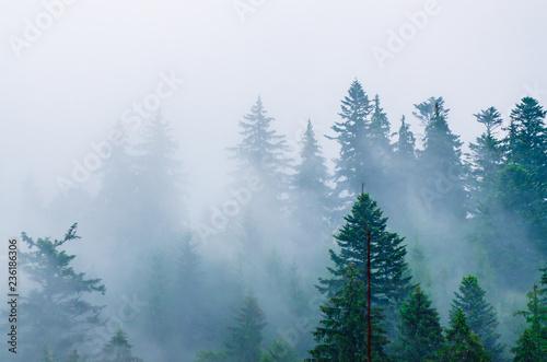 Fotografie, Obraz  Misty mountain landscape