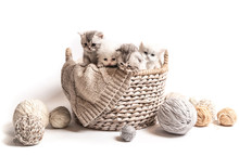 Little Fluffy White-gray Kittens Isolated