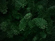 Dark Green Fraser Fir Christma...