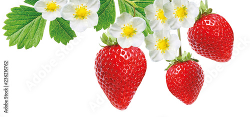 strawberry freshness tasty
