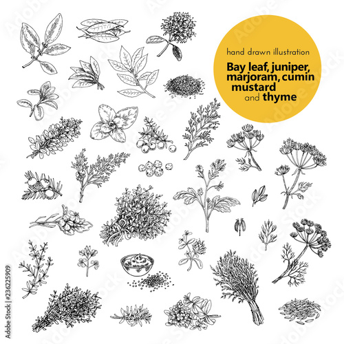 Photo  hand drawn vector illustration of herbs and spices
