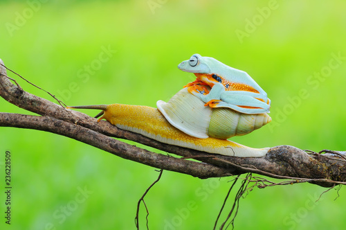 Frog with snail, Flying Frog,