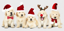 Group Of Adorable Golden Retri...
