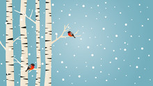 Snowy Birch Trees And Bullfinches Birds, Winter Vector Background