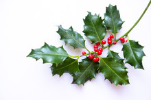 Single Sprig Of Simple Holly With Bright Christmas Red Berries On White Background