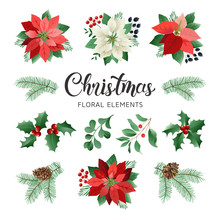 Poinsettia Flowers And Christmas Floral Elements In Watercolor Style Vector.