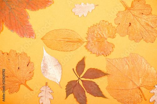 Photo  листья осенние лежат на столе фоновое изображение