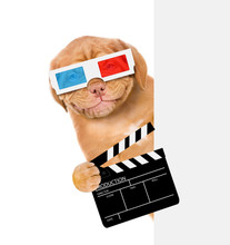 Smiling Puppy In 3d Glasses Ho...