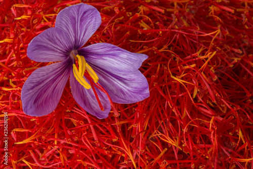 Photo Flowers of saffron after collection