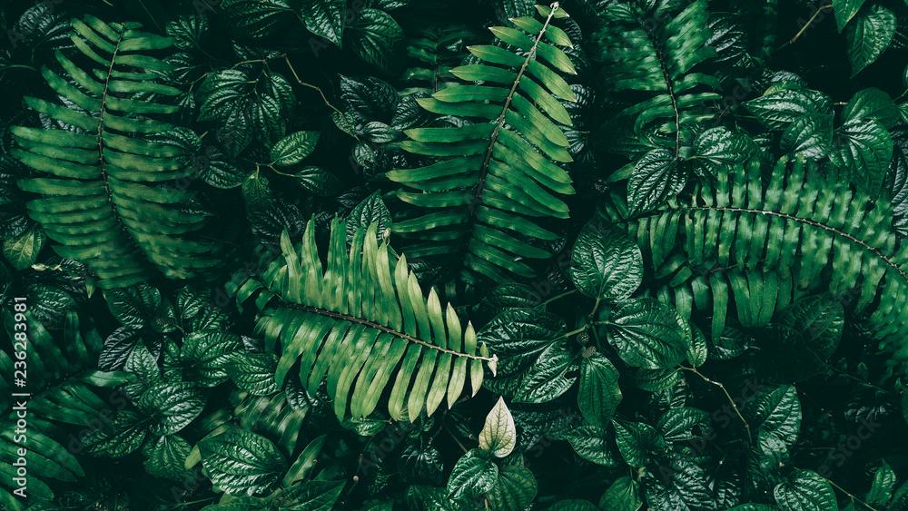 Photo  Tropical green leaf in dark tone.