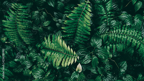 Fotografering  Tropical green leaf in dark tone.