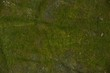 Green moss in stone on background