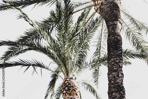 Cadres-photo bureau Palmier Palm trees crowns.